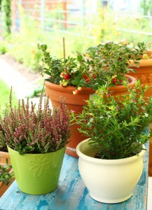 Outdoor Tips to Save Time this Summer - bhgrelife.com