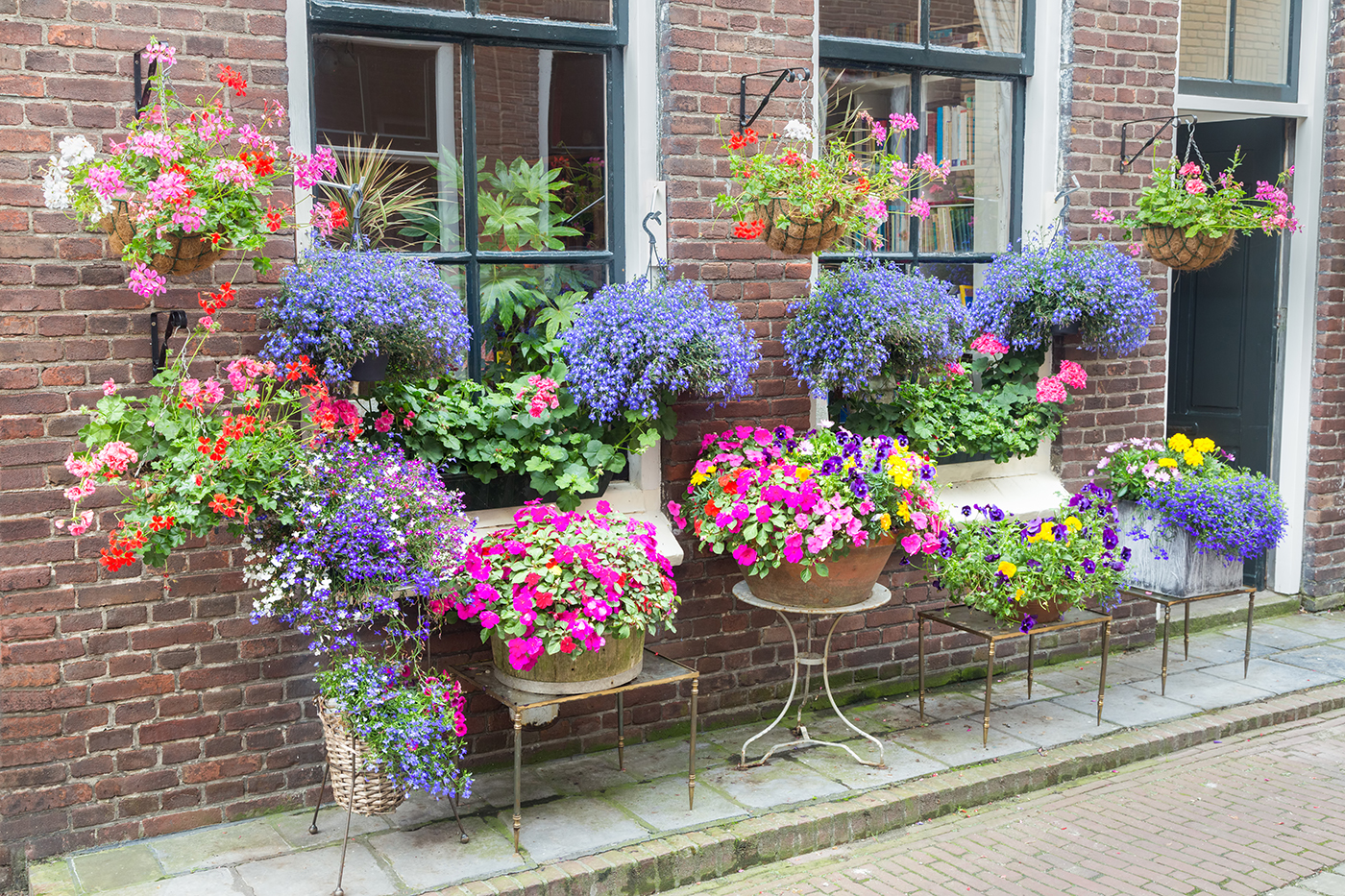 Ask A Pro Qa Are Lobelia Plants Poisonous Better Homes And