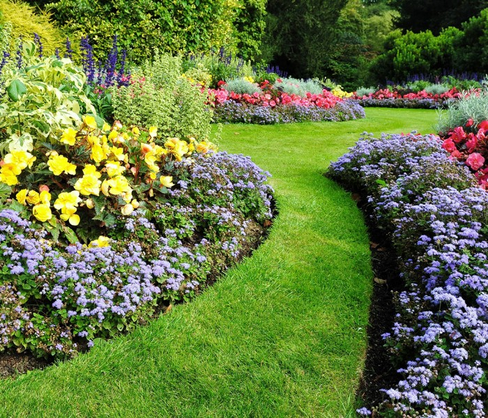 6 Tips for Water-Efficient Landscaping