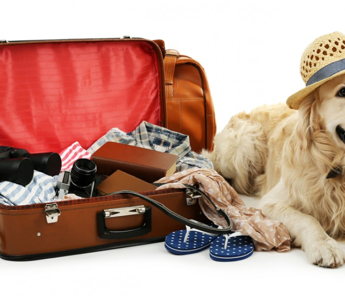 Tips for Moving out of State with a Pet