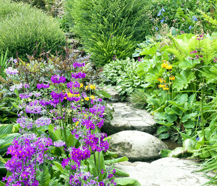 Ask a Pro Q&A: Starting an English Cottage Garden