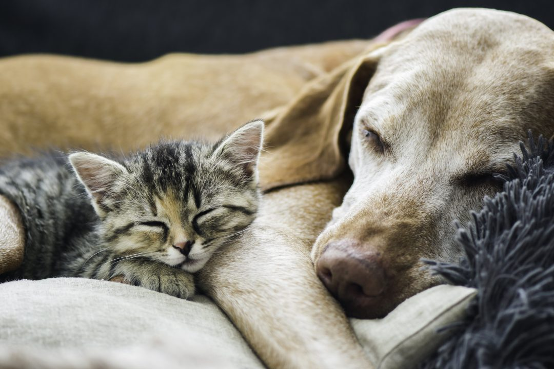 Top Tips for Moving with Your Furry Family Member