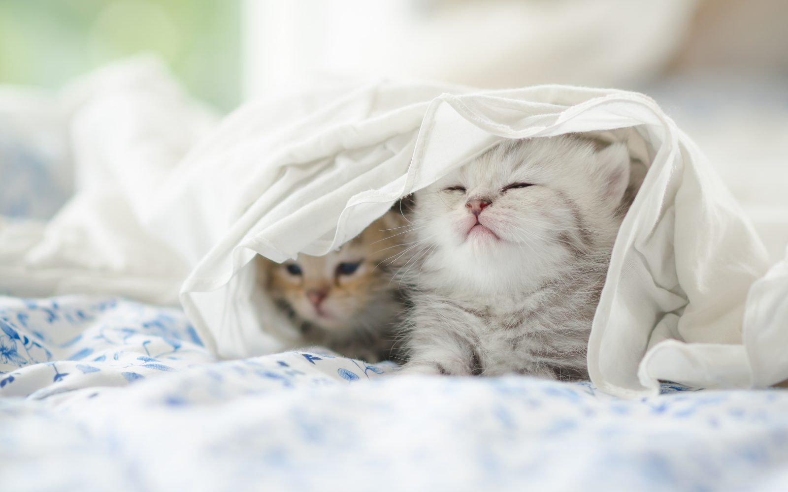 Cat blankets for shelters