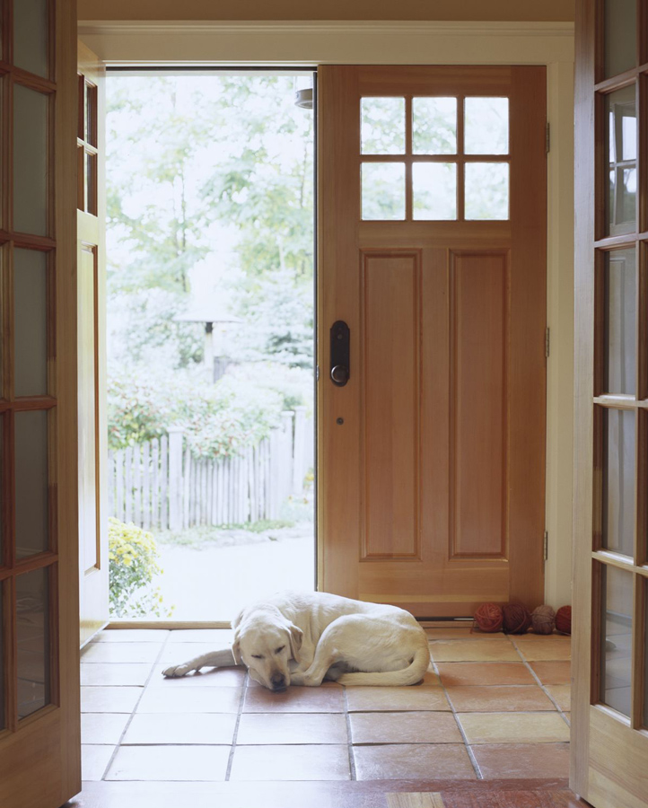 Choose flooring that's suitable for your pet