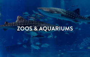 Zoos & Aquariums BHGRE Summer at Home
